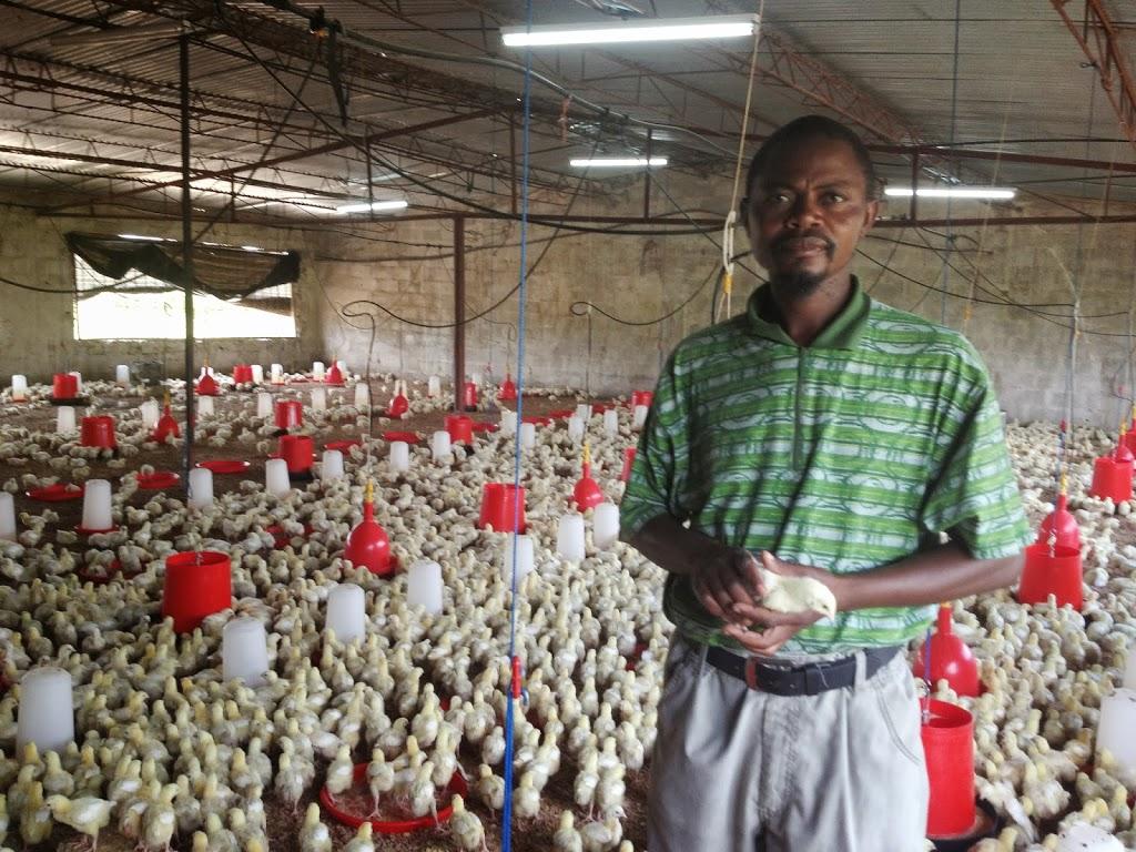 Spark Ventures | Poultry Farm 2 0