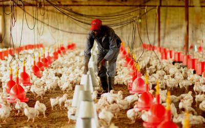 poultry-farm---1_16381148102_o
